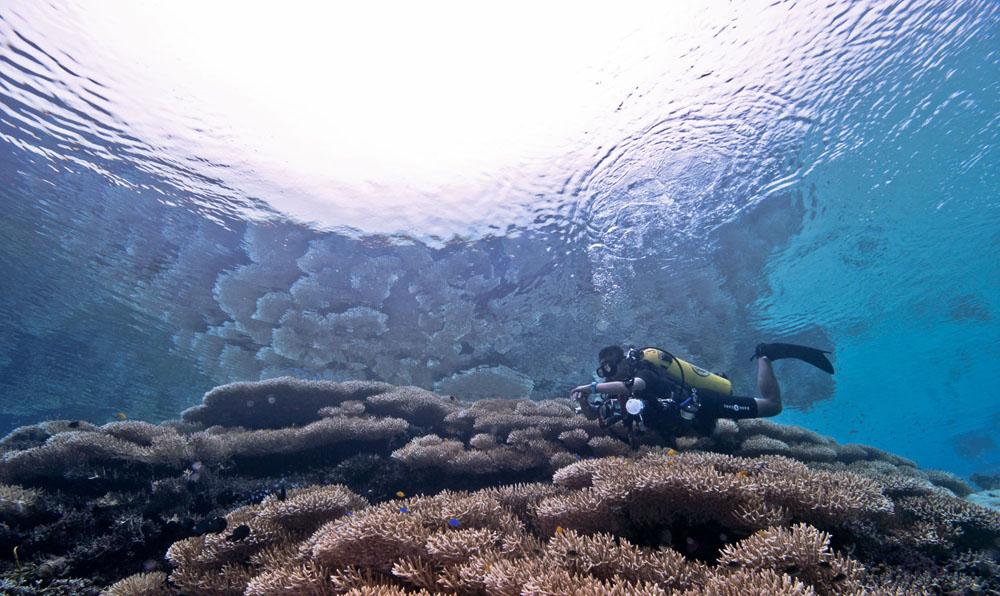 bubbles dive center jakarta