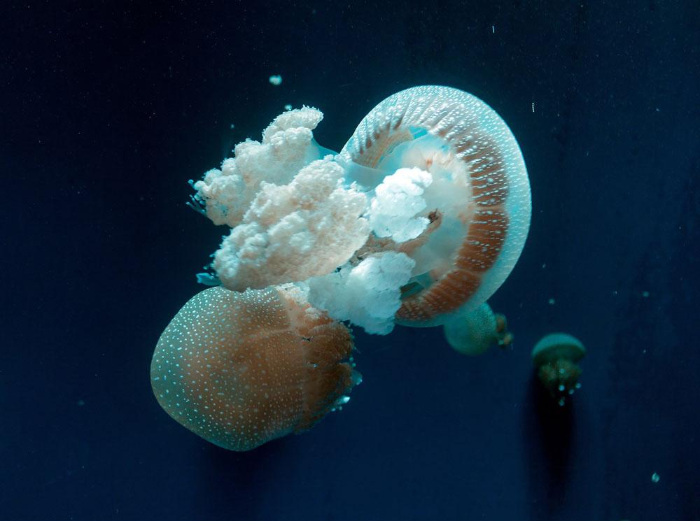 aquarium west jakarta