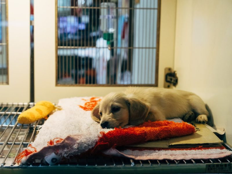 Adopt pets in Jakarta's Animal Shelters!