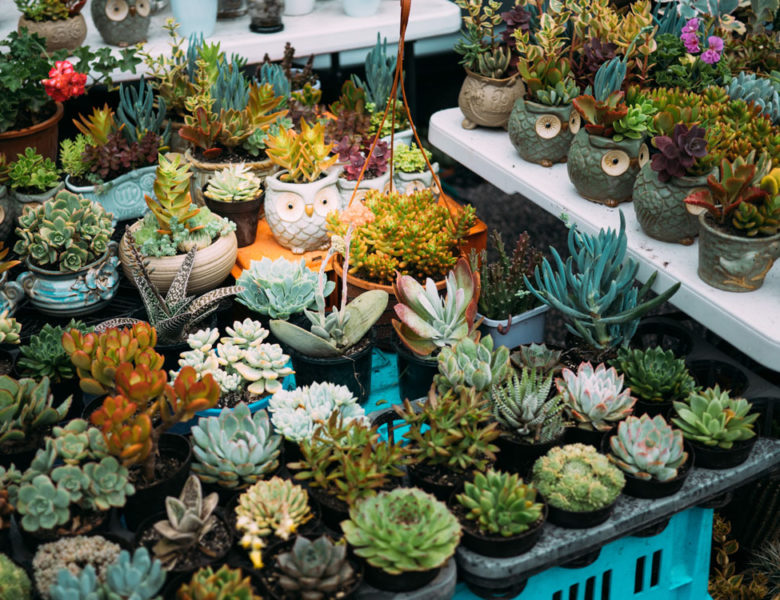 Best Places to Buy Plants in Jakarta