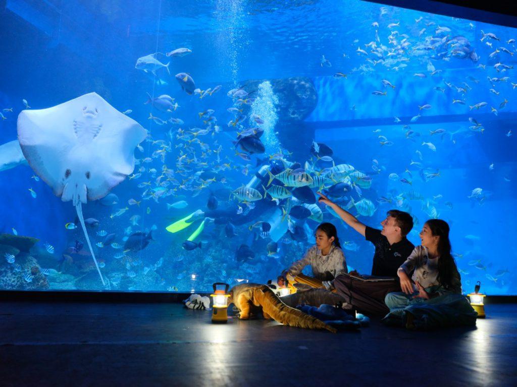 Jakarta Aquarium view