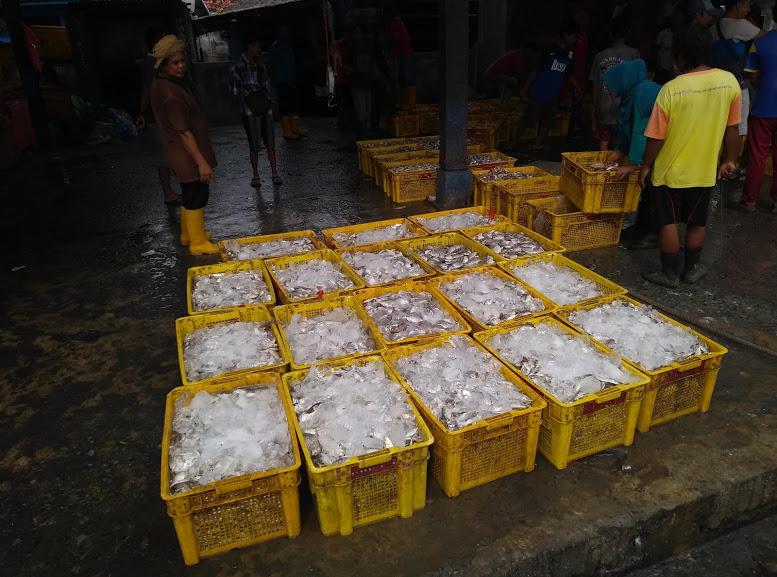 Pasar Ikan Terbaik di Tangerang