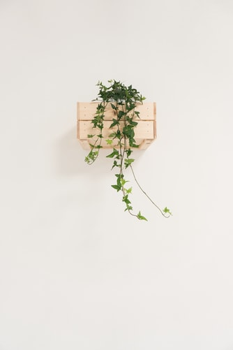 dekorasi dinding tanaman hias