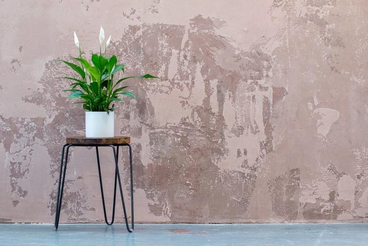 Peace Lily decorative plant