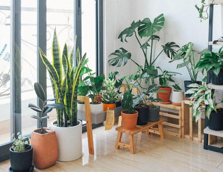 Mencoba Urban Gardening di Jakarta