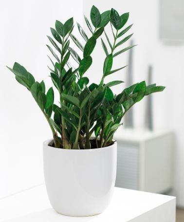 25 tanaman terbaik untuk dekorasi rumah | flokq coliving