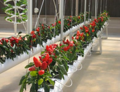 11 Best Hydroponic Plants: Easy for Beginners!