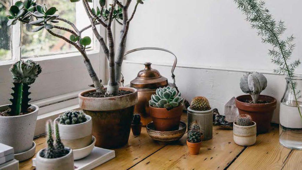 tips dekorasi sukulen kaktus