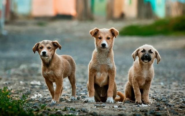 adopt dogs jakarta