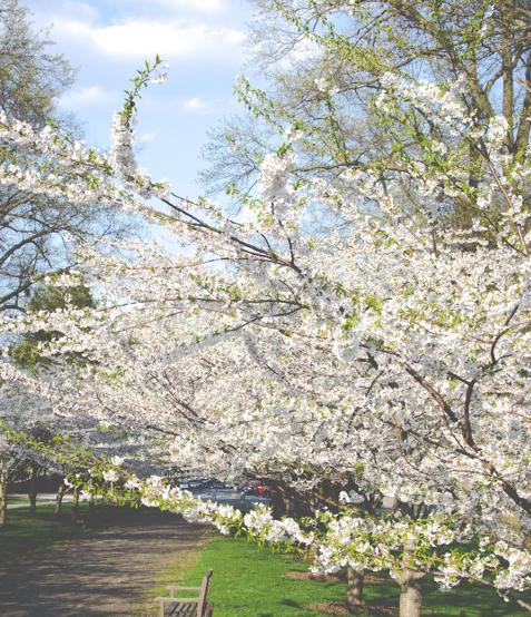 12 Jenis Bunga Putih Tercantik untuk Menghias Taman Rumahmu