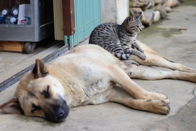 adopt pets jakarta