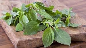 basil leaves diy air freshener