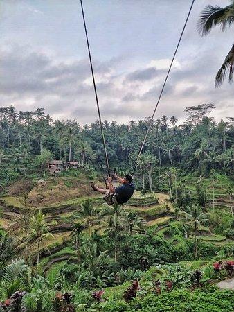 rice terrace swing bali