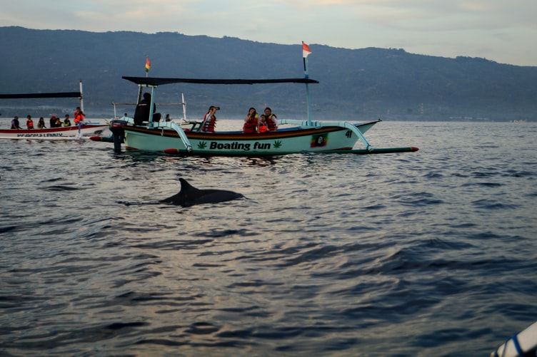 dolphins lovina north bali
