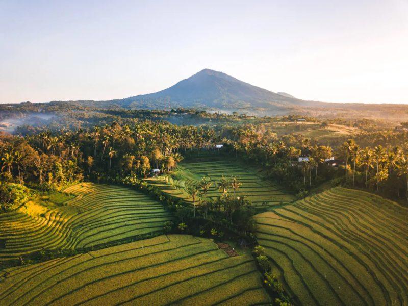 7 Sawah Terasering di Bali yang Tampak Luar Biasa Sepanjang Tahun!