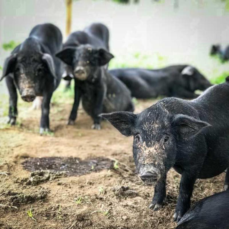 bali heritage pigs pork bali