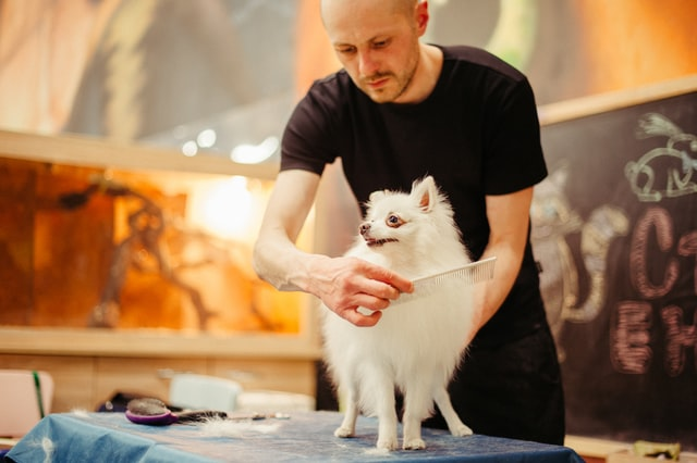 Spoil Your Lovely Pets with These 10 Best Pet Grooming in Bali