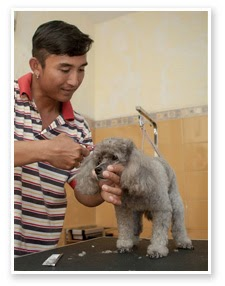pet grroming at bali kennel