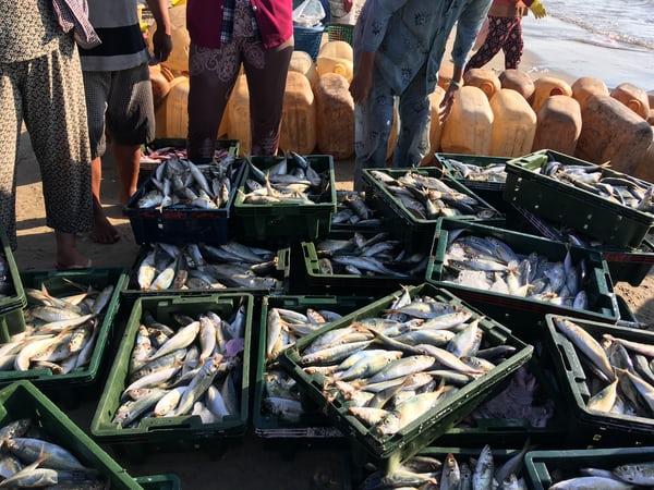Rekomendasi Pasar Ikan Terbaik di Bali